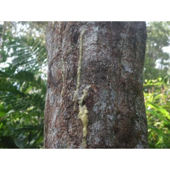 Vykurovadlo - Benzoin Sumatra 60ml