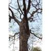 Vykurovadlo - Santalové drevo 30ml