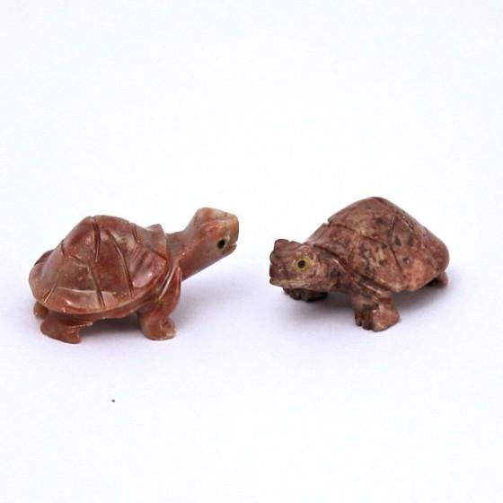 Mramorová korytnačka - Peru M