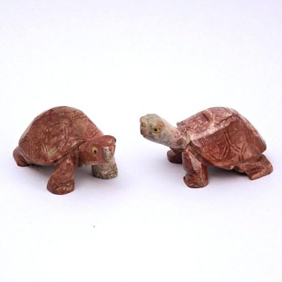 Mramorová korytnačka - Peru L