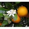Organický éterický olej - Pomaranč sladký 10ml - NHR